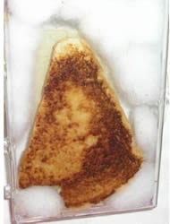 Virgin Mary Grill Cheese Sandwich